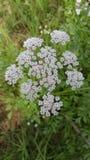 Mooie kleine bloemen stock afbeeldingen