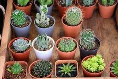 Mooie kleine cactuspotten Stock Afbeelding