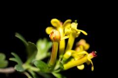 Mooie kleine gele bloemen in aard Macro stock afbeelding
