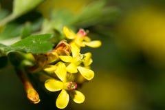 Mooie kleine gele bloemen in aard Macro stock afbeeldingen