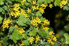 Mooie kleine gele bloemen in aard Macro royalty-vrije stock afbeelding