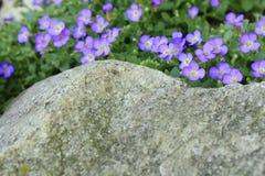 Mooie kleine purpere bloemen Royalty-vrije Stock Afbeeldingen