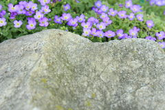 Mooie kleine purpere bloemen Stock Fotografie