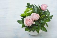 Mooie kleine rozen Royalty-vrije Stock Afbeeldingen