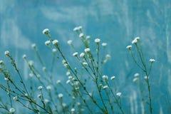 Mooie kleine witte bloemenclose-up in de zomer Royalty-vrije Stock Fotografie
