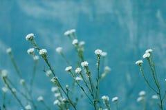 Mooie kleine witte bloemenclose-up in de zomer Royalty-vrije Stock Foto
