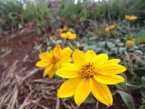 Mooie kleine zonnebloemen royalty-vrije stock afbeeldingen