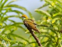 Mooie kleuren op de vogel Royalty-vrije Stock Afbeelding