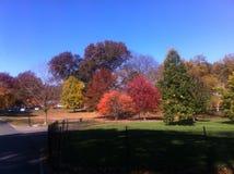 Mooie kleuren van bomen in upstate New York Stock Foto