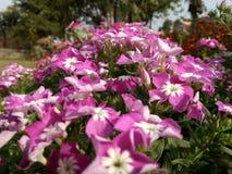 Mooie kleurenbloemen stock afbeeldingen