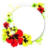 Mooie kleurenbloemen, op een wit Stock Fotografie