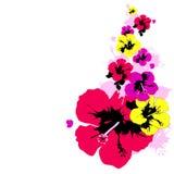 Mooie kleurenbloemen, op een wit Stock Foto's