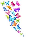 Mooie kleurenvlinders, op een wit Royalty-vrije Stock Foto's
