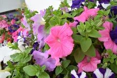Mooie kleurrijke bloemen Stock Afbeeldingen