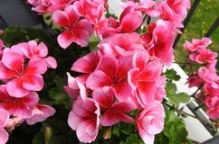 Mooie Kleurrijke bloemen Stock Foto's