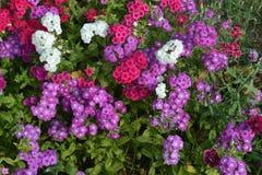 Mooie kleurrijke Bloemen, Bos van Bloemen Stock Afbeeldingen
