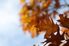 Mooie kleurrijke de herfstbladeren Royalty-vrije Stock Fotografie