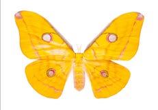Mooie kleurrijke die vlinder op wit wordt geïsoleerd Stock Foto