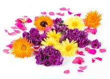 Mooie kleurrijke eetbare bloemen Royalty-vrije Stock Afbeeldingen