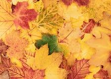 Mooie kleurrijke, herfstachtergrond van bladeren royalty-vrije stock foto's