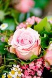 Mooie kleurrijke inzameling van de zomerviering van de bloemenlente royalty-vrije stock foto