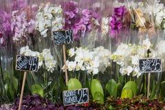 Mooie kleurrijke Orchideebloemen in bloemwinkel Royalty-vrije Stock Foto