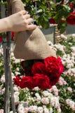 Mooie kleurrijke Rose Flower ter beschikking stock afbeeldingen