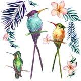 Mooie kleurrijke tropische vogels die op takken geïsoleerd o zitten stock illustratie