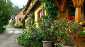 Mooie kleurrijke tuin met bloemen over de regen, langzame motiemening van water het vallen stock video