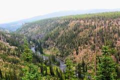 Mooie klippen van het Yellowstone de Nationale Park met rotsen en mos en bossen stock afbeeldingen