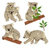 Mooie koala Royalty-vrije Stock Foto