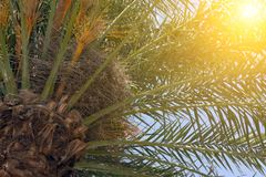 Mooie kokospalmen royalty-vrije stock foto