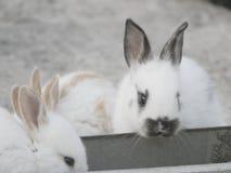 Mooie konijnen op landbouwbedrijf Royalty-vrije Stock Fotografie