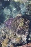 Mooie koral Stock Fotografie