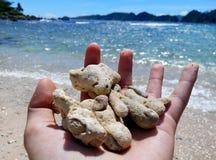 Mooie koralen Royalty-vrije Stock Fotografie