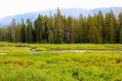 Mooie kreek of de stroom van het Yellowstone de Nationale Park onder de bossen royalty-vrije stock fotografie