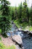 Mooie kreek of de stroom van het Yellowstone de Nationale Park onder de bossen stock fotografie