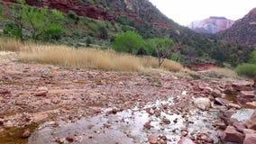 Mooie kreek in Zion National Park, Utah de V.S. stock videobeelden