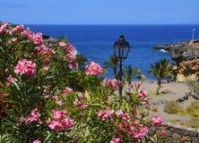 Mooie kustmening van het strand van Playa Paraiso met bloeiende oleander in de voorgrond op Tenerife, Canarische Eilanden, Spanje Royalty-vrije Stock Foto
