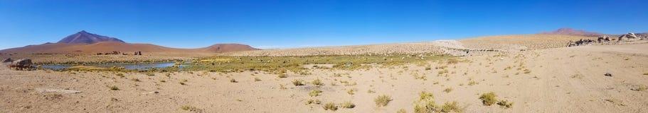 Mooie lama's in de Andes in Zuid-Amerika stock afbeeldingen