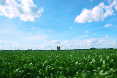 Mooie landbouwbedrijfmening in platteland Royalty-vrije Stock Fotografie