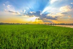 Mooie landschappen met padievelden en blauwe hemel Royalty-vrije Stock Foto