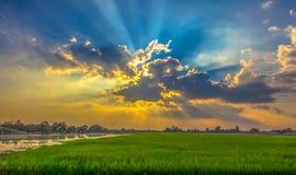 Mooie landschappen met padievelden en blauwe hemel Stock Fotografie