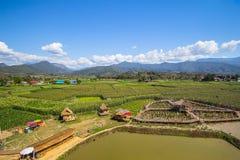 Mooie landschappen met padievelden en blauwe hemel Stock Afbeelding