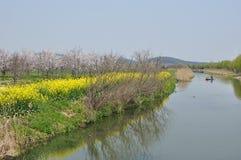 Mooie landschappen van de lente Stock Foto