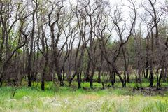 Mooie landschappen van Rusland Het gebied van Rostov Kleurrijke plaatsen Groene vegetatie en rivieren met meren en moerassen Boss stock afbeelding