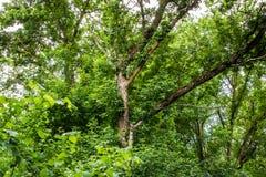 Mooie landschappen van Rusland Het gebied van Rostov Kleurrijke plaatsen Groene vegetatie en rivieren met meren en moerassen Boss stock foto