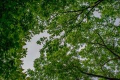 Mooie landschappen van Rusland Het gebied van Rostov Kleurrijke plaatsen Groene vegetatie en rivieren met meren en moerassen Boss stock foto's