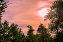 Mooie landschappen van Rusland Het gebied van Rostov Kleurrijke plaatsen Groene vegetatie en rivieren met meren en moerassen Boss royalty-vrije stock fotografie
