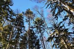 Mooie landschappen van Russische Europese aard Landschappen van alle seizoenen royalty-vrije stock afbeeldingen